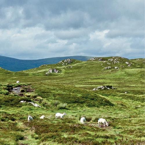 Randonnée en autonomie dans les montagnes de Wicklow en Irlande.