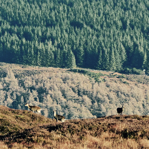 Randonnée en liberté dans les montagnes de Wicklow en Irlande.